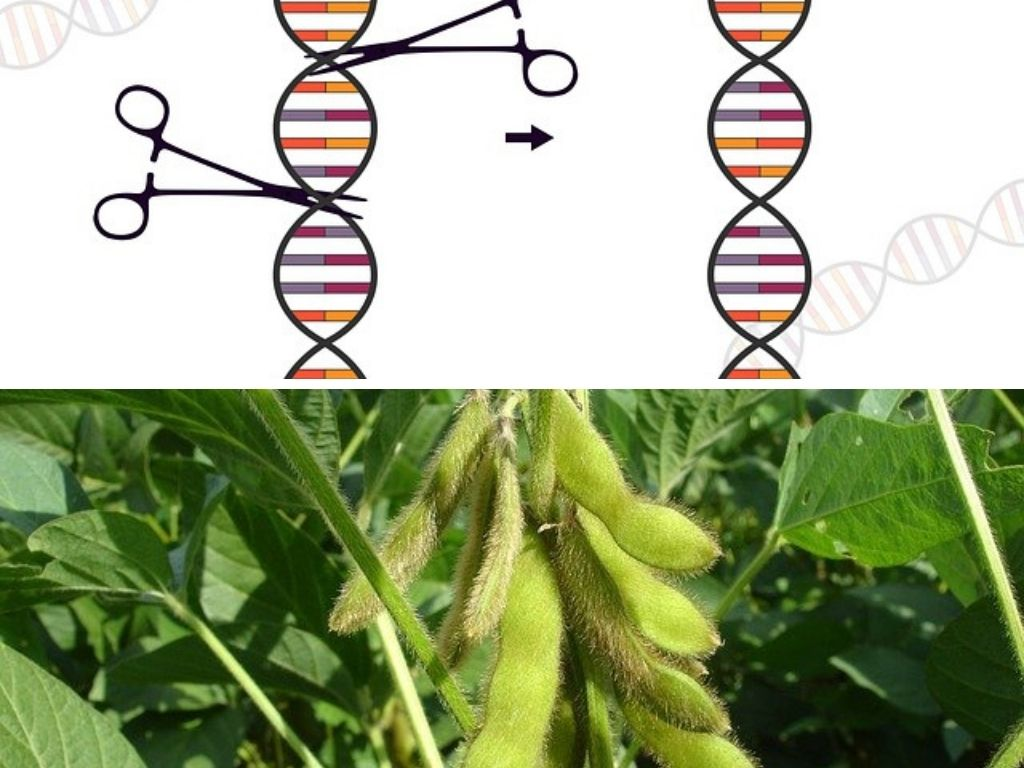 Pros & Cons Of GMO Crops & Foods