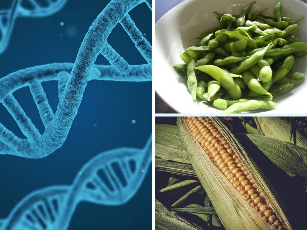 What Are GMOs? - Overview Of Types, Uses, Examples, Stats & Facts, & More