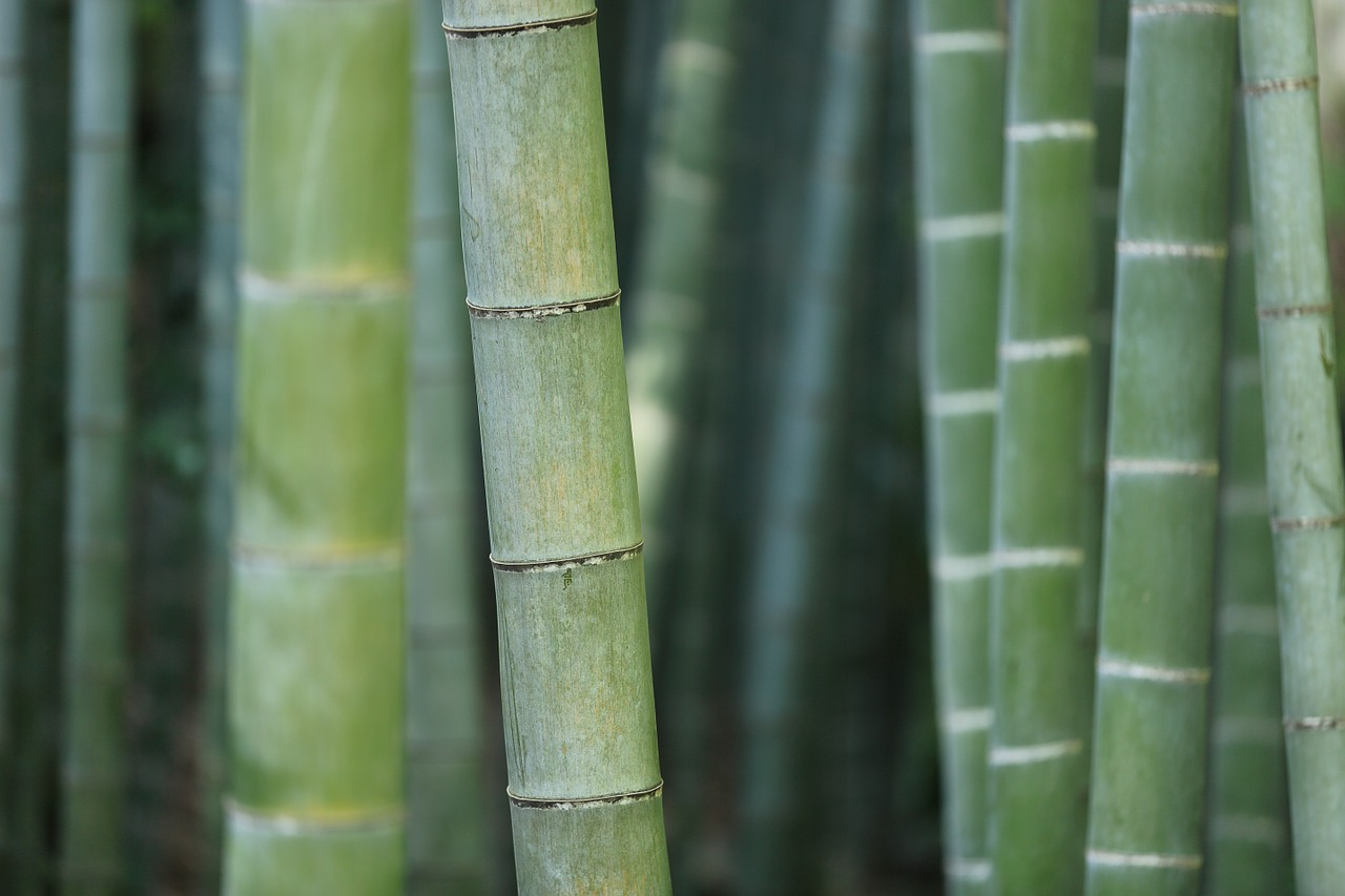 A Short Guide About Bamboo - Uses/Products, Growing & More
