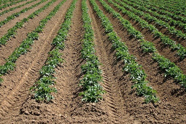 How Much Topsoil Do We Need For Agriculture, How Much Is Left, & Will We Run Out?