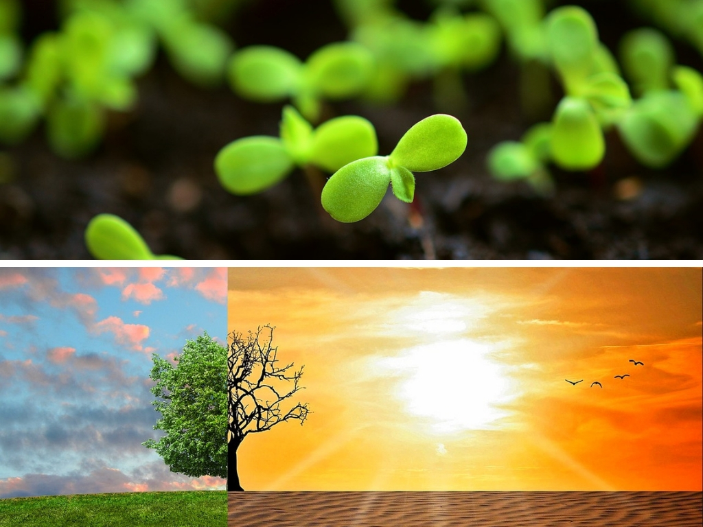 How To Know What Grows Best In Your Geographic Area &/Or Climate Zone