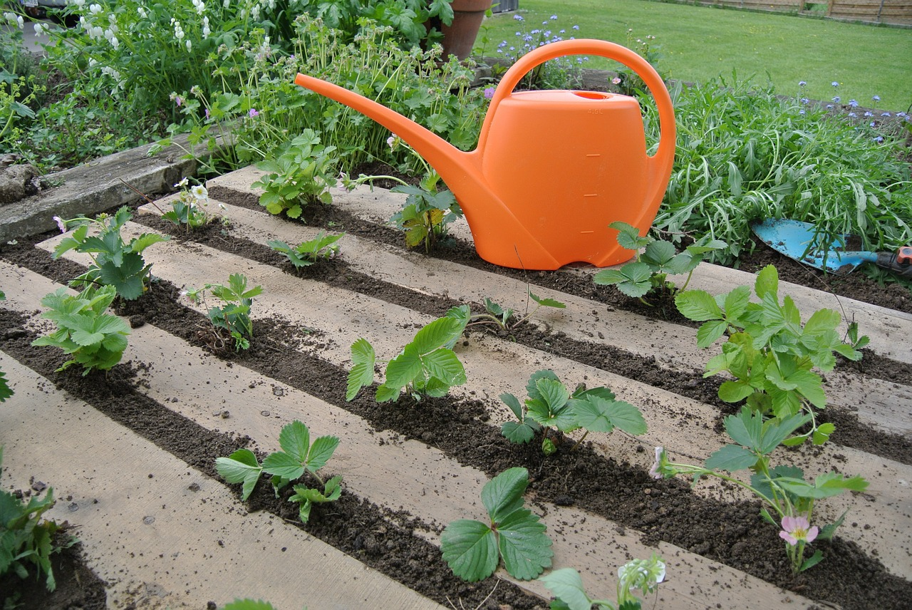 How To Know What Can Grow In Your Garden & Soil