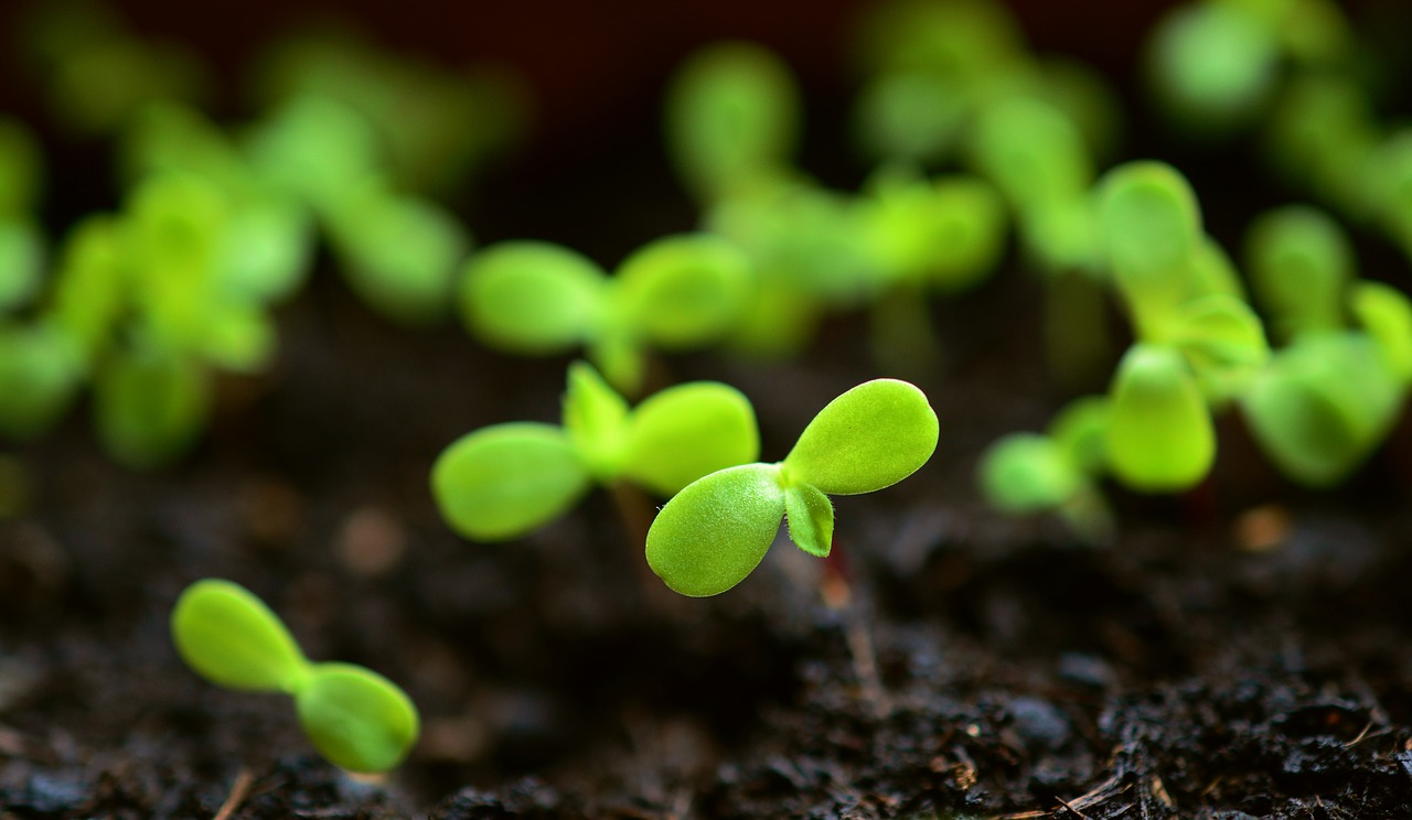 How To Improve Soil Fertility, & Overall Soil Quality